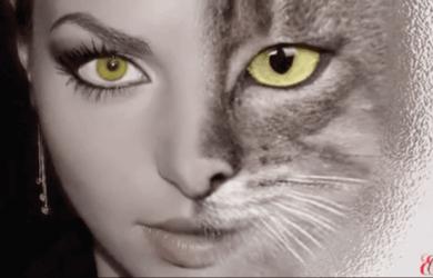 Кошки и люди